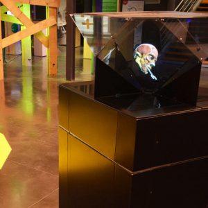 - Illumina Crystal anatomie 300x300 - **La plus large Gamme d'Hologrammes d'Europe**